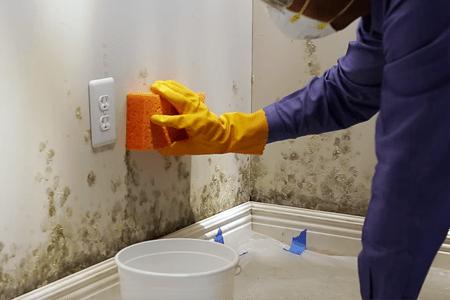 Dicas de como remover o mofo da parede