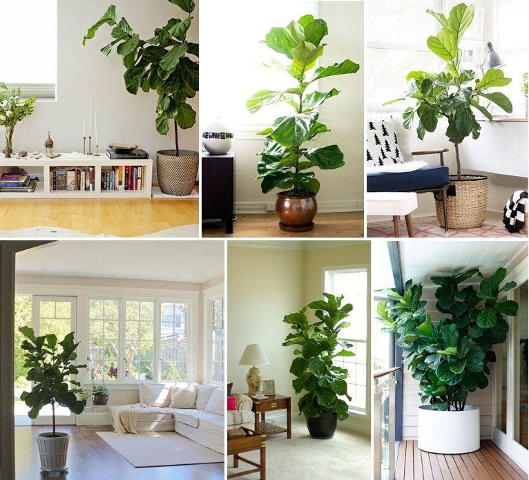 24 plantas perfeitas para decorar o interior da sua casa